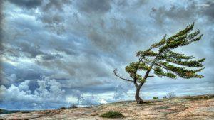 wind-blown-tree-on-the-cliff-6196-1920x1080